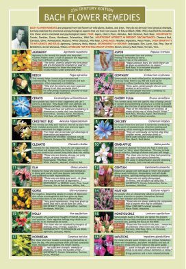 Bach flower remedies chart