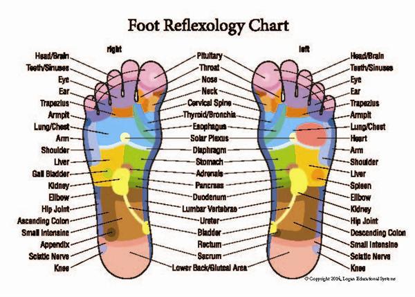 Foot Reflexology Chart Foot Reflexology And Reflexology Manual Guide